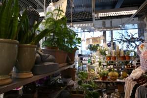 Växter Tyresö