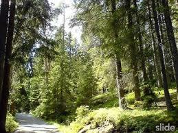 Tyresta nationalpark3