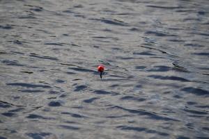 fiske (109)