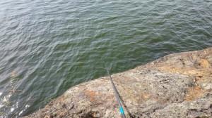 fiske (178)