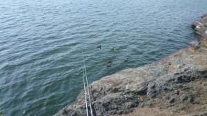 fiske (181)