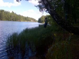 fiske (231)