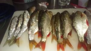 fiske (246)