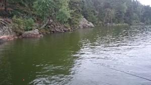 fiske (260)