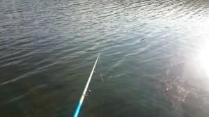 fiske (265)
