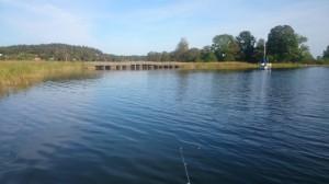 fiske (269)